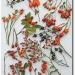 rosehip-roses-seen-on-rosenhof-schultheis-de