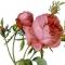 golden-age_-redoute_rosa_centifolia_foliacea_17