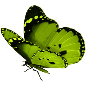 green-butterfly-pinterest
