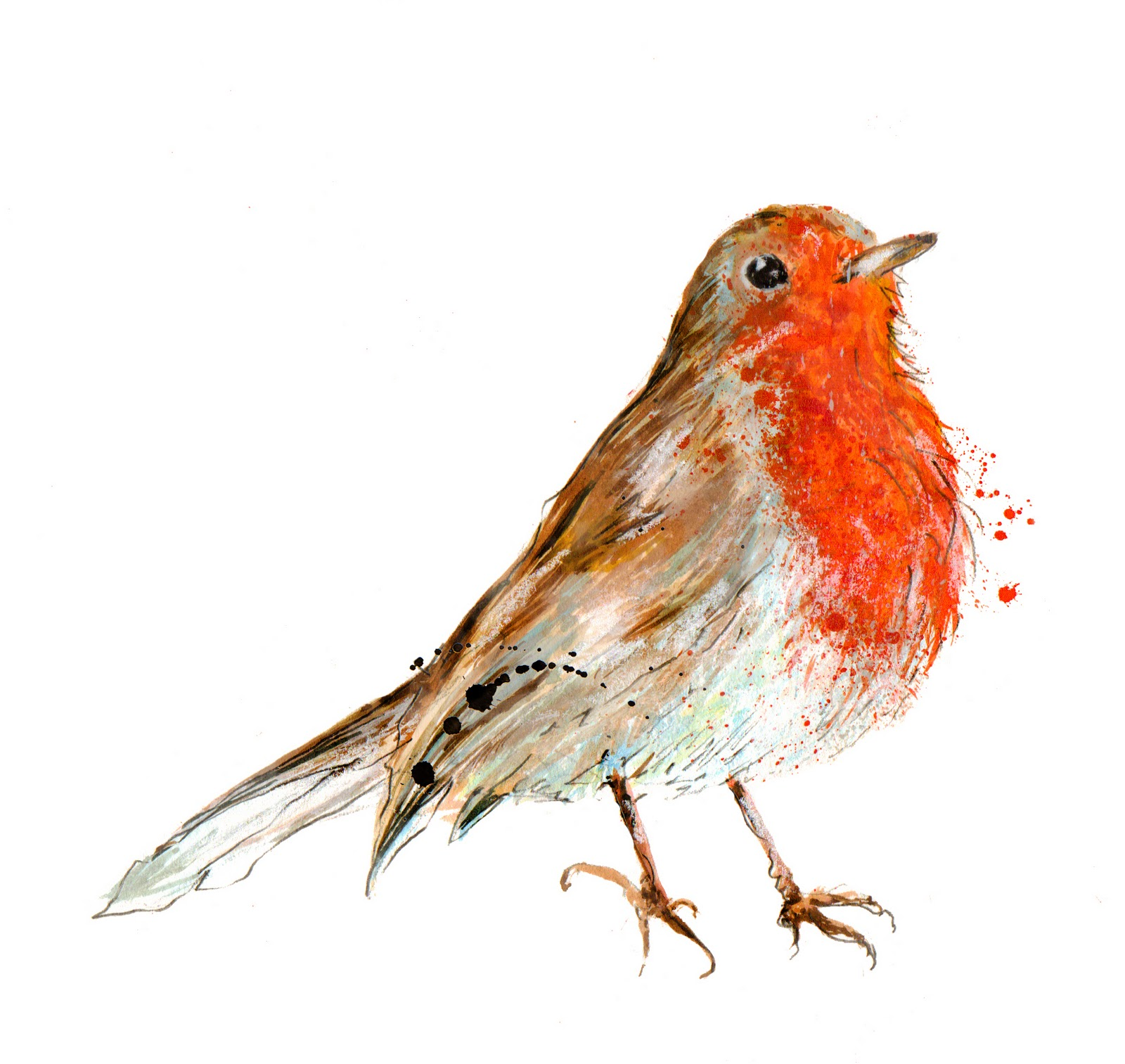 rocky-robin