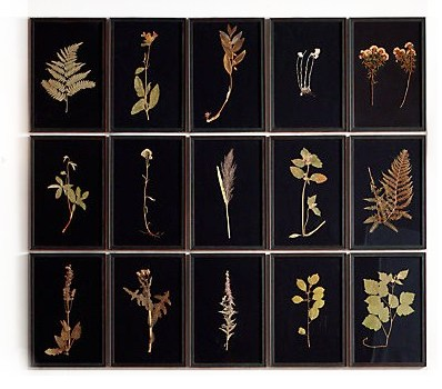 Hand-Pressed Botanicals on Linen From Restoration Hardware