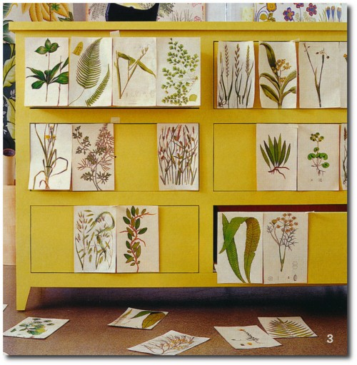Botanical Prints, Botanical Crafts, 18th Century Decorating